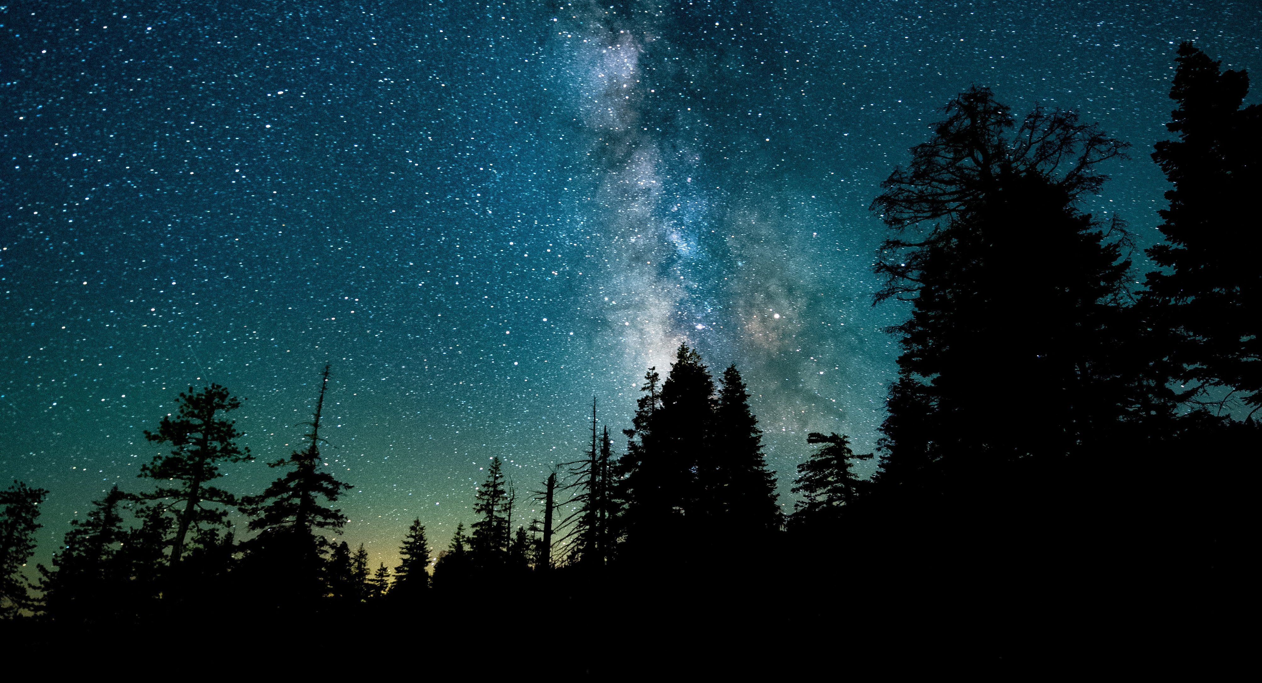 A dark treeline and the milky way visible in the sky, at night.